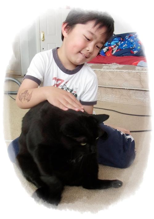猫たちの受難_f0021101_1550249.jpg