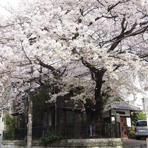 恵比寿で花見_f0099102_21451919.jpg
