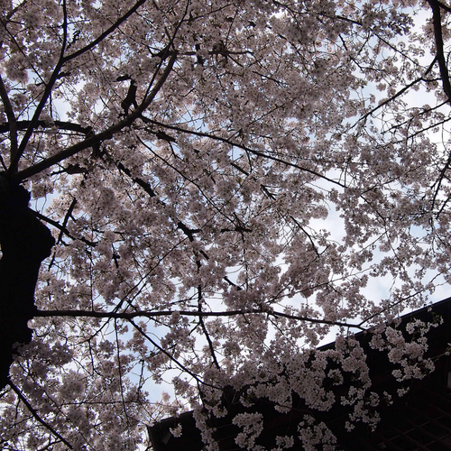 恵比寿で花見_f0099102_21473355.jpg
