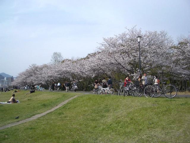 お花見散歩_a0047004_031997.jpg