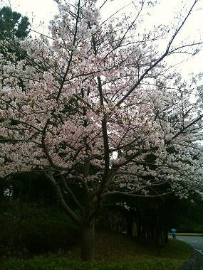 エコ・ジャーニーラン in 葛西臨海公園_a0036808_16362884.jpg