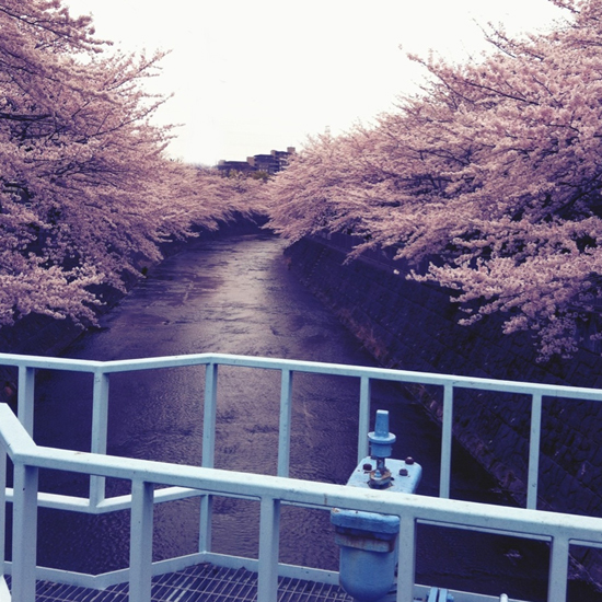 サクラ散歩_b0133509_149580.jpg