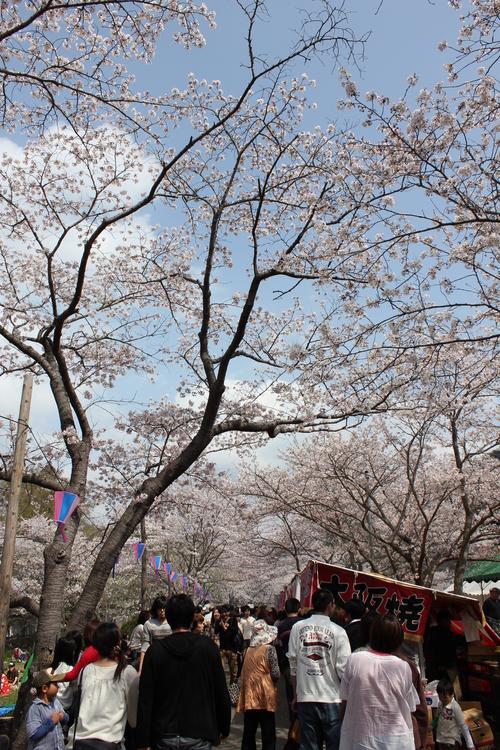 2011年4月10日 桜ツーリング(o^O^o) <2011-NO3>_d0038712_23431222.jpg