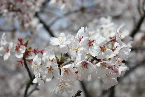 2011年4月10日 桜ツーリング(o^O^o) <2011-NO3>_d0038712_23442367.jpg