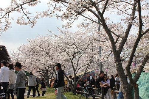 2011年4月10日 桜ツーリング(o^O^o) <2011-NO3>_d0038712_2345933.jpg