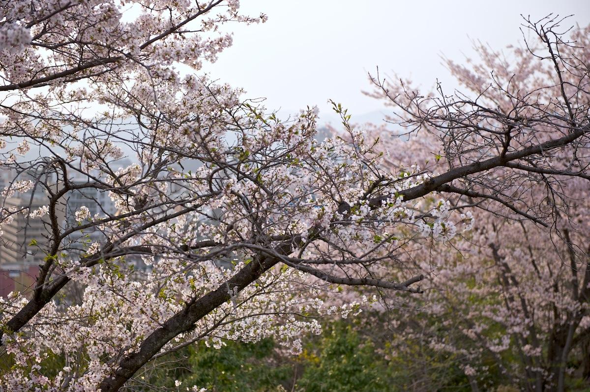 花曇り_f0231512_0412383.jpg