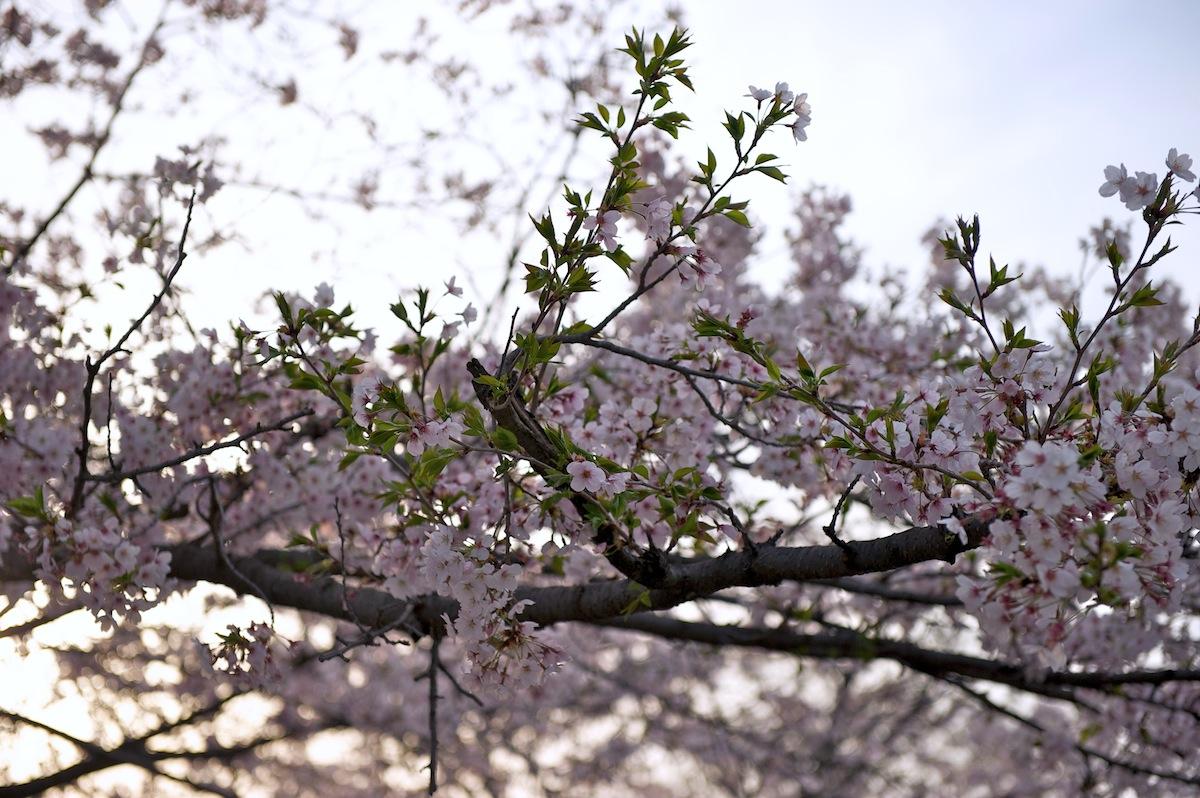 花曇り_f0231512_0424878.jpg