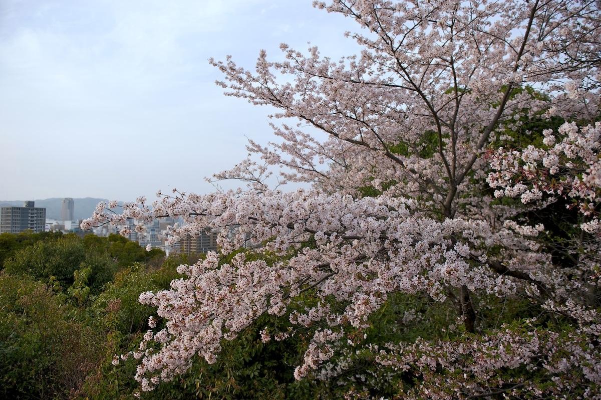 花曇り_f0231512_043195.jpg