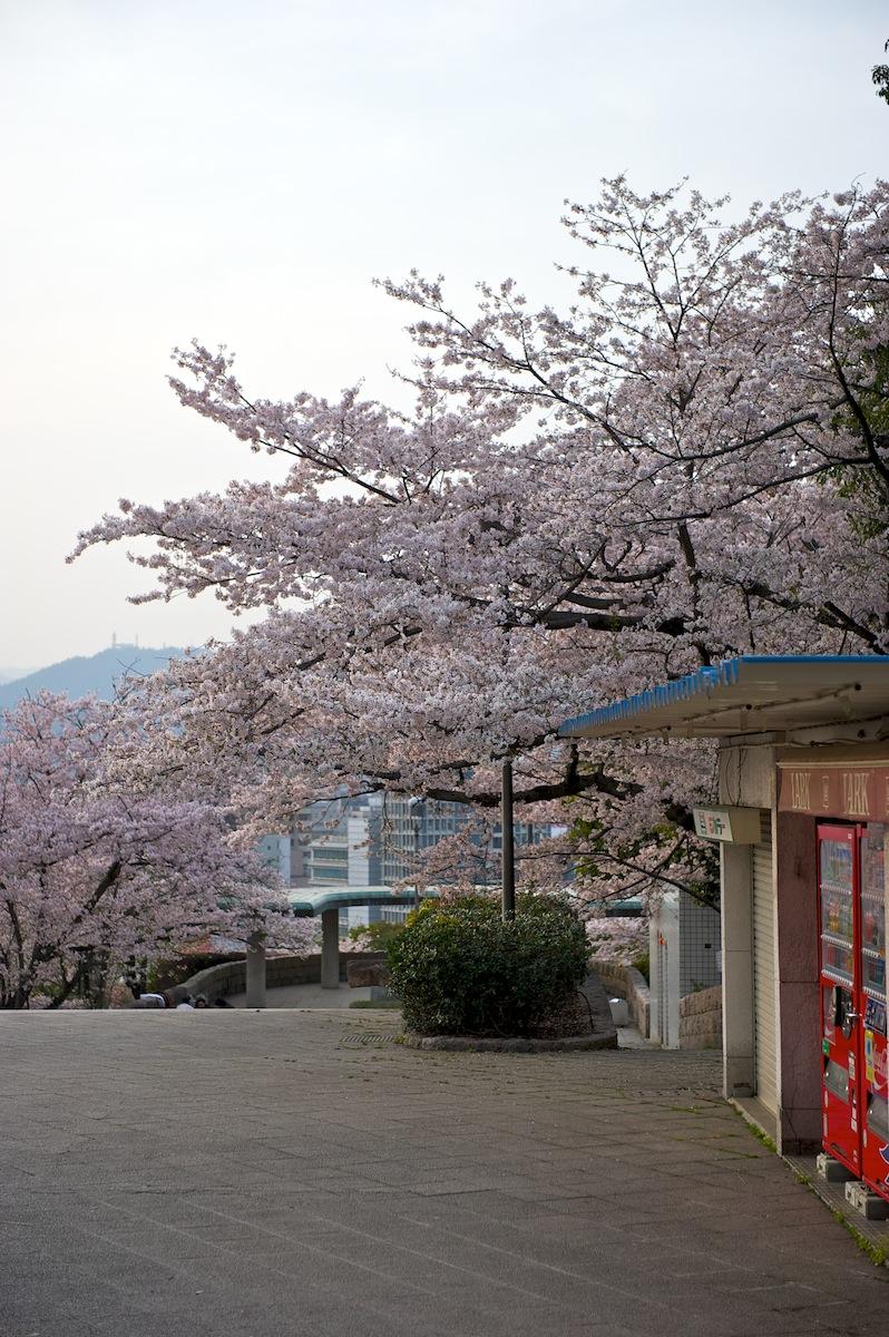 花曇り_f0231512_0441191.jpg