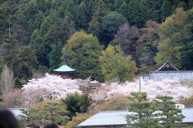 京の花だより 嵐山_e0048413_19483062.jpg