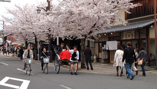 京の花だより 嵐山_e0048413_1948428.jpg