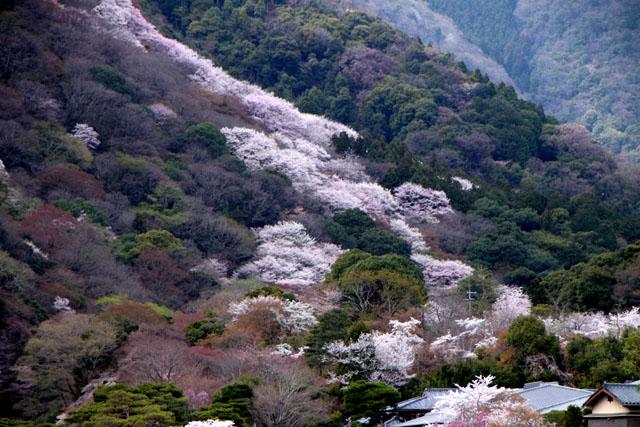京の花だより 嵐山_e0048413_1949023.jpg