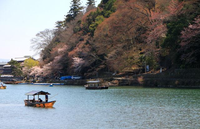 京の花だより 嵐山_e0048413_19491699.jpg