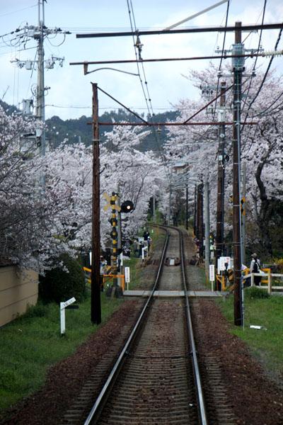 京の花だより 嵐電 桜のトンネル_e0048413_20263354.jpg