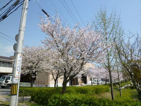 潮江浦田川親水公園の桜_e0228813_941233.jpg