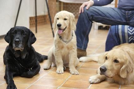 大型犬限定パーティー, 2010\'_e0191026_2339625.jpg