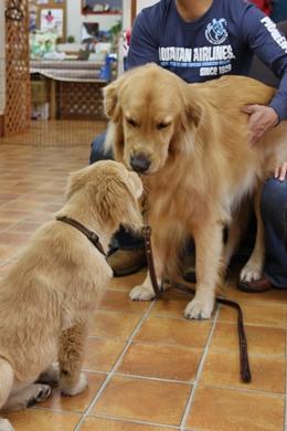 大型犬限定パーティー, 2010\'_e0191026_23431110.jpg