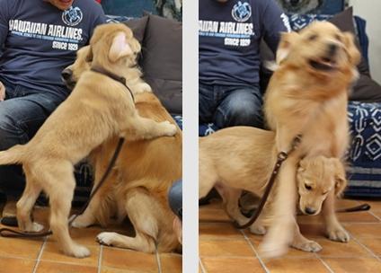 大型犬限定パーティー, 2010\'_e0191026_2349112.jpg