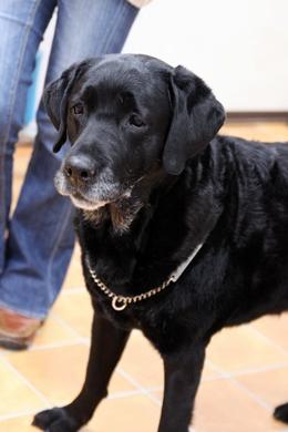 大型犬限定パーティー, 2010\'_e0191026_23525479.jpg