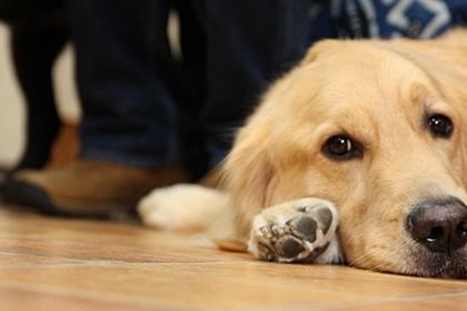 大型犬限定パーティー, 2010\'_e0191026_23551658.jpg