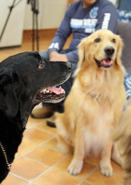 大型犬限定パーティー, 2010\'_e0191026_2359303.jpg