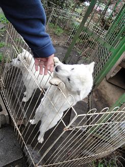 犬を飼うまで日記_e0170128_1958473.jpg
