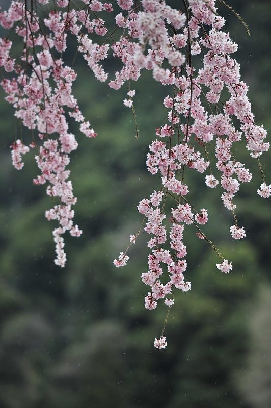 春の長谷寺_f0050534_849128.jpg