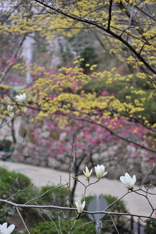春の長谷寺_f0050534_8492383.jpg