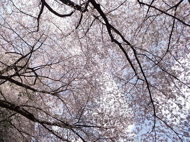 気分を変えて お花見です_f0050534_9125495.jpg