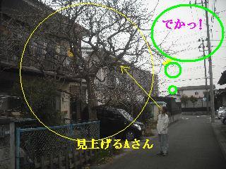 f0031037_1727463.jpg