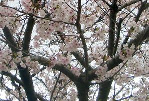 デザイン書道教室 / 2011-04-09_c0141944_22565553.jpg