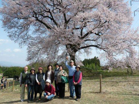 新府の桃0.5分咲、わに塚・神代桜最高♪_f0019247_081269.jpg