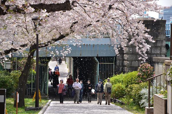 春のうららの隅田川_a0003650_23351291.jpg