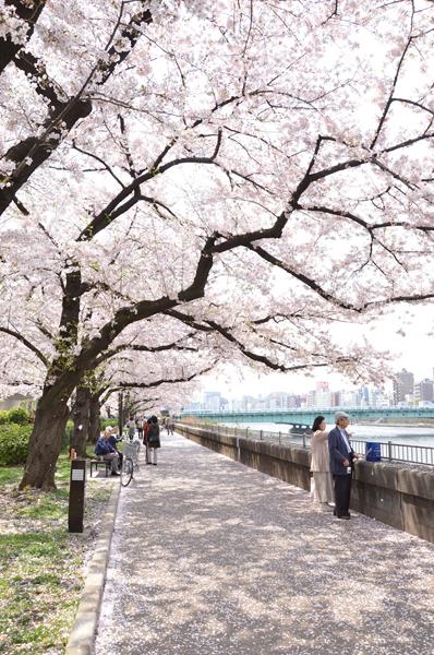 春のうららの隅田川_a0003650_2335298.jpg