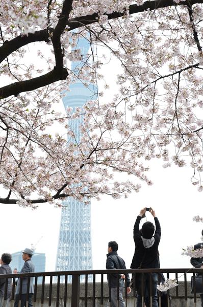 春のうららの隅田川_a0003650_23352989.jpg