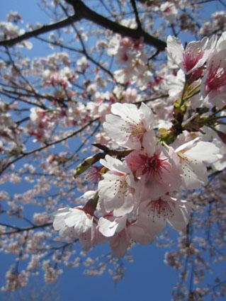 4月17日鬼子母神手創り市_a0137353_22123549.jpg