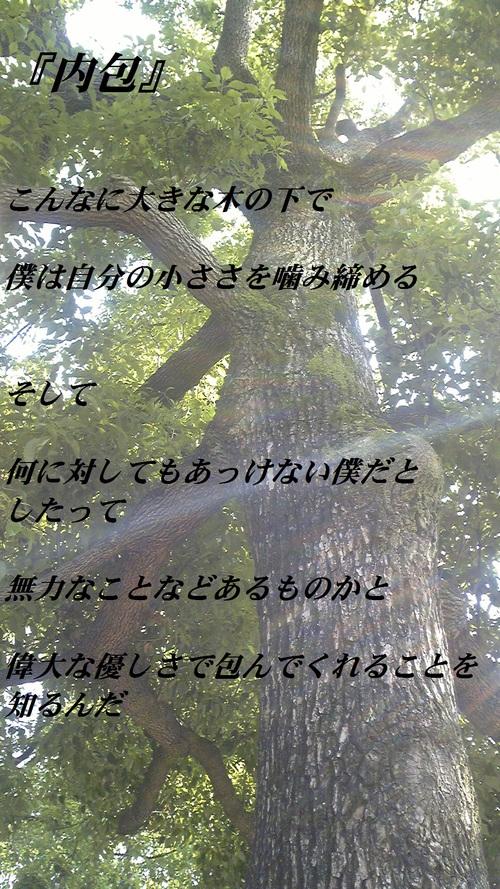 b0165858_854375.jpg