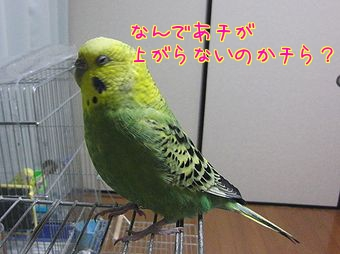 f0196665_23205841.jpg