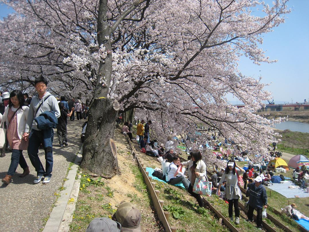 春爛漫_f0205367_1217139.jpg