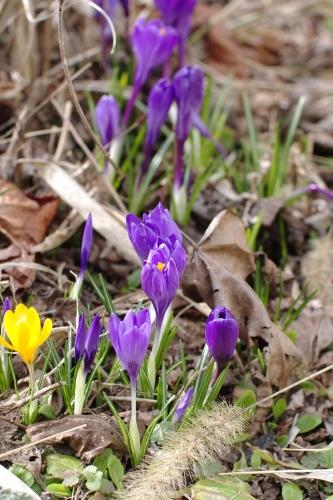 美上下の春 ①_c0110869_2195936.jpg
