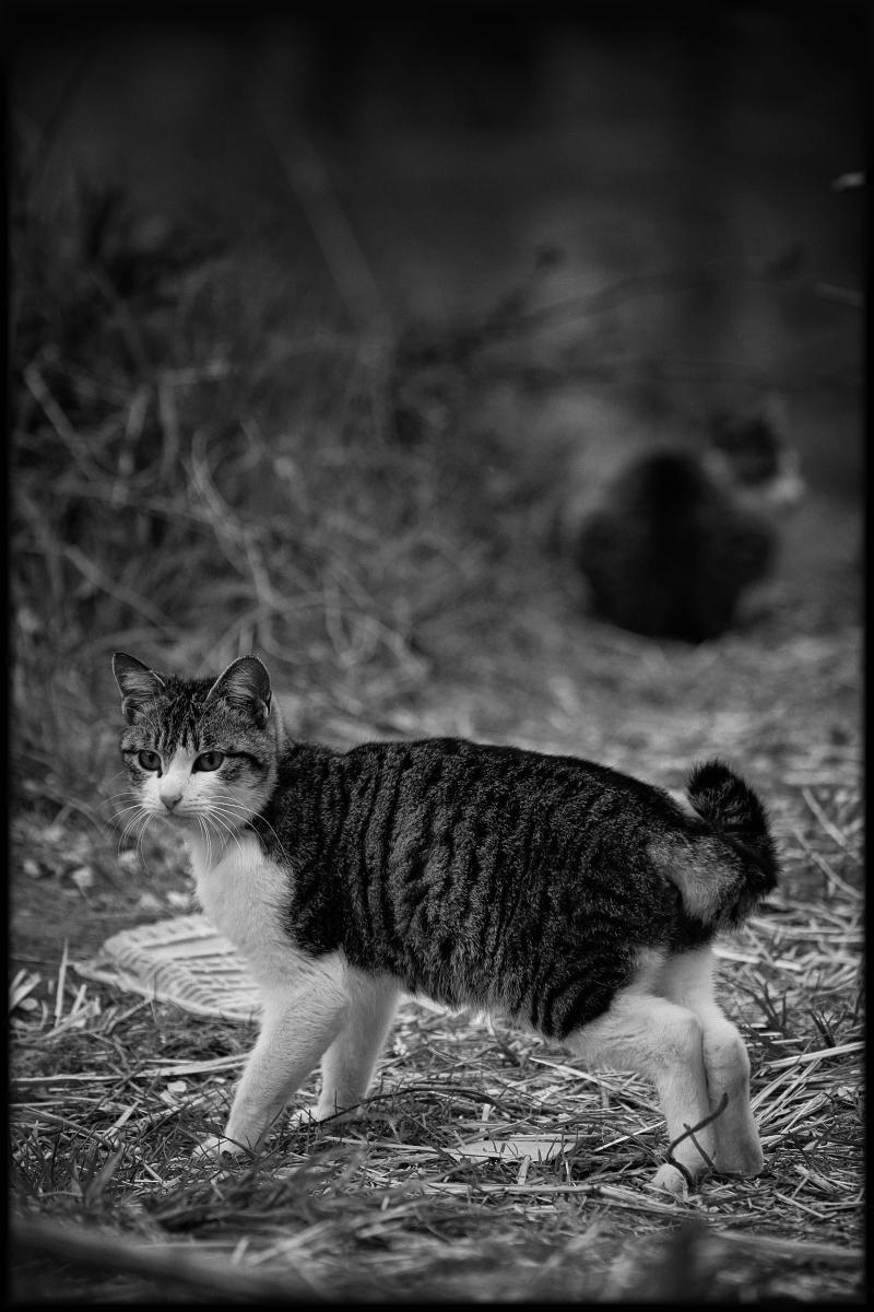 猫にゃん_f0021869_20475852.jpg