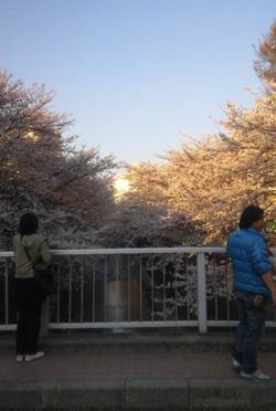日本閣限定お花見ランチ「SAKURAご膳」_d0079577_13585481.jpg