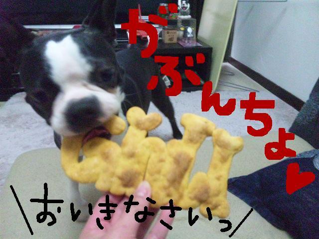 城北公園&しあん★サプライズ再び…_d0187891_20202799.jpg