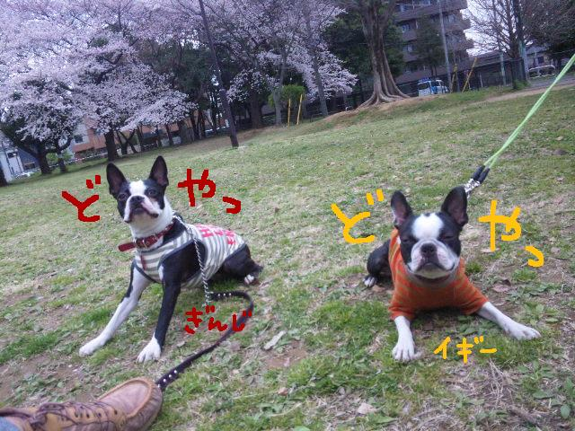 城北公園&しあん★サプライズ再び…_d0187891_20203515.jpg