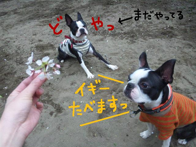 城北公園&しあん★サプライズ再び…_d0187891_20204348.jpg