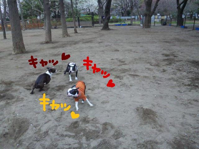 城北公園&しあん★サプライズ再び…_d0187891_2021054.jpg