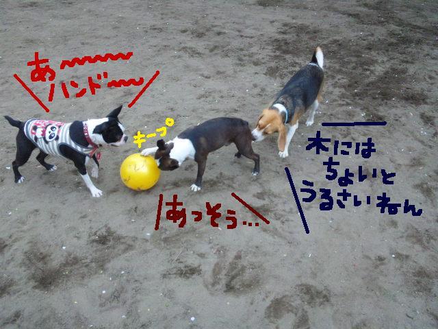 城北公園&しあん★サプライズ再び…_d0187891_20211960.jpg