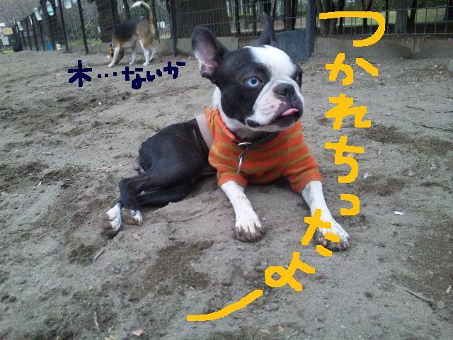 城北公園&しあん★サプライズ再び…_d0187891_20212833.jpg