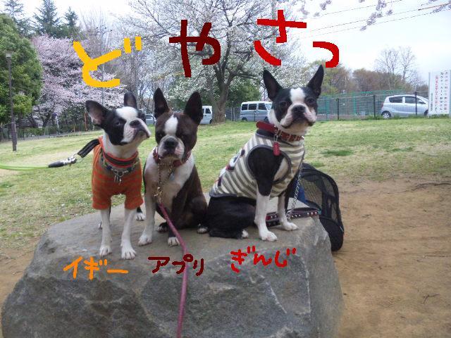 城北公園&しあん★サプライズ再び…_d0187891_20214433.jpg