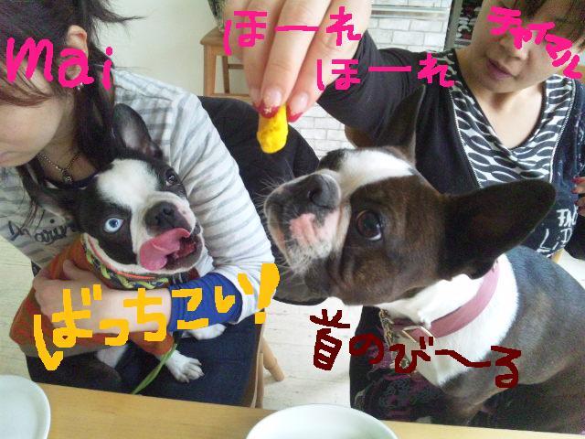 城北公園&しあん★サプライズ再び…_d0187891_20223353.jpg